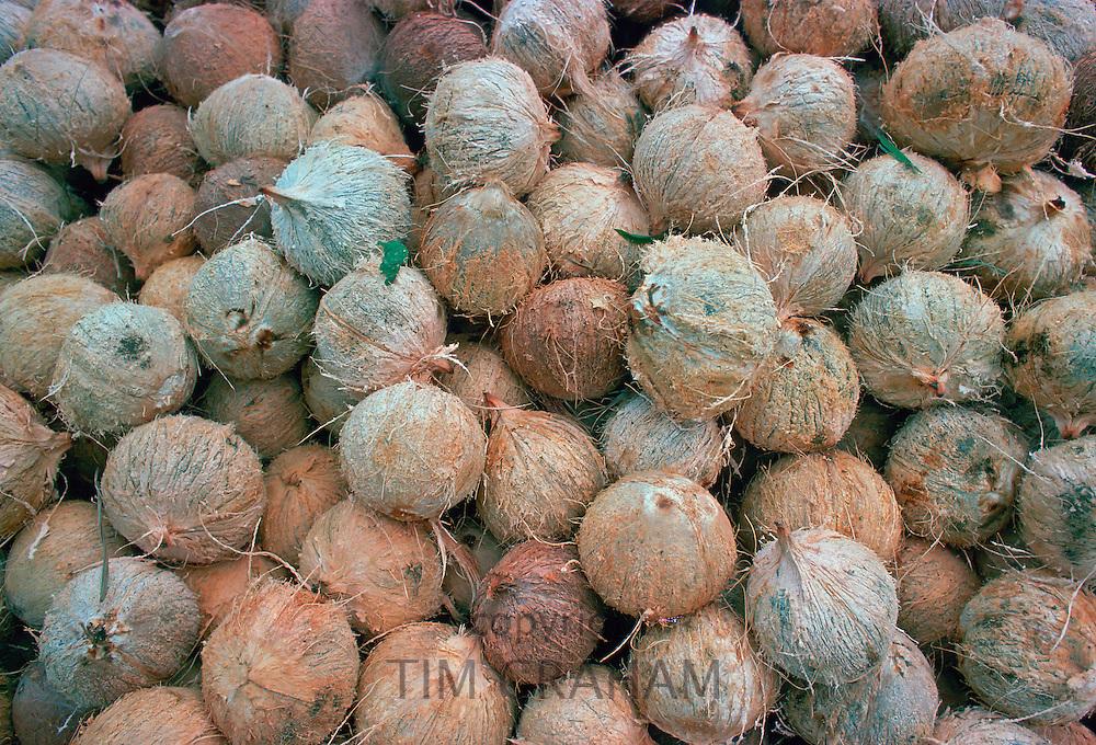 Coconuts, Philippines