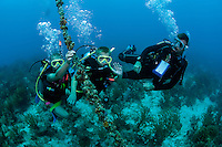 Young divers descend upon their first certification checkout dive....Shot in British Virgin Islands