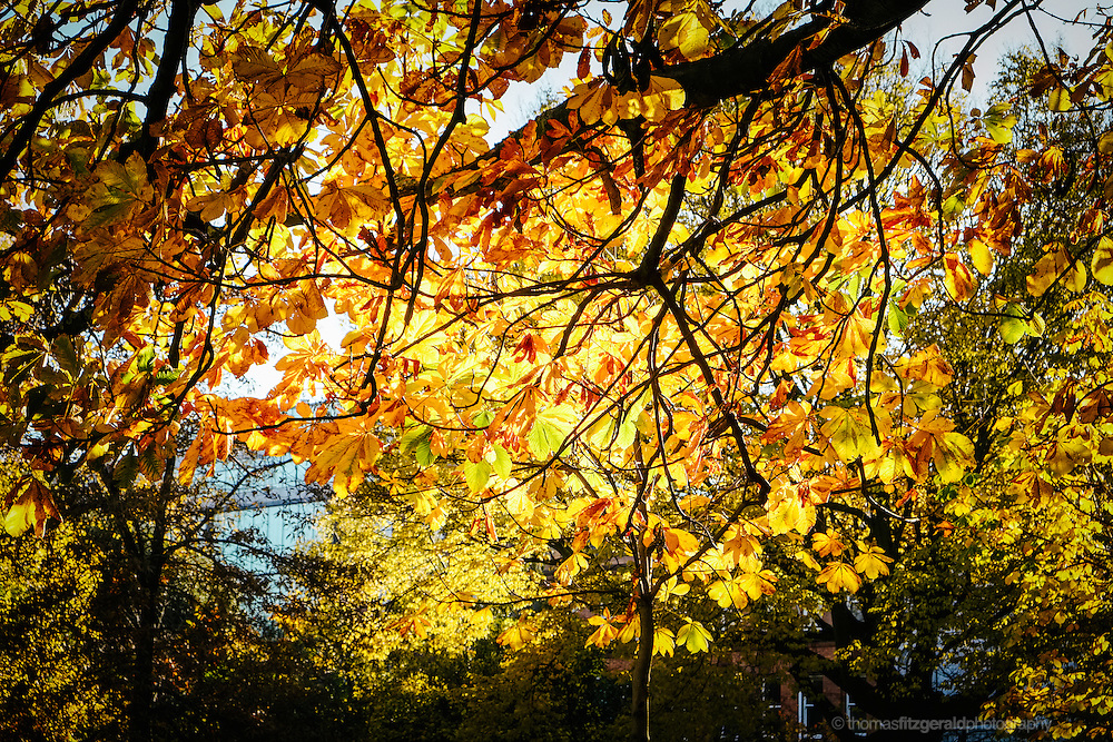 Shadows of Gold and rown leaves as the sun shines through from behind