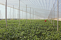 Field of crops protected by covered roofing Murcia Spain