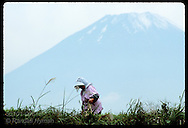 Woman in bonnet weeds her farm field beneath towering peak of Mt Fuji on October morn; Gotemba Japan