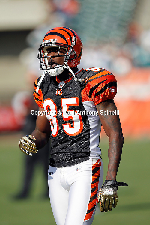 Cincinnati Bengals wide receiver Chad Ochocinco (85) looks on during the NFL week 8 football game against the Miami Dolphins on Sunday, October 31, 2010 in Cincinnati, Ohio. The Dolphins won the game 22-14. (©Paul Anthony Spinelli)