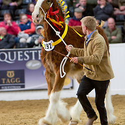 SHS Spring Show 2014 Colts, Geldings and Stallions