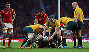 Australia's back rower David Pocock controlling the break down during the Rugby World CupPool A match between Australia and Wales at Twickenham, Richmond, United Kingdom on 10 October 2015. Photo by Matthew Redman.