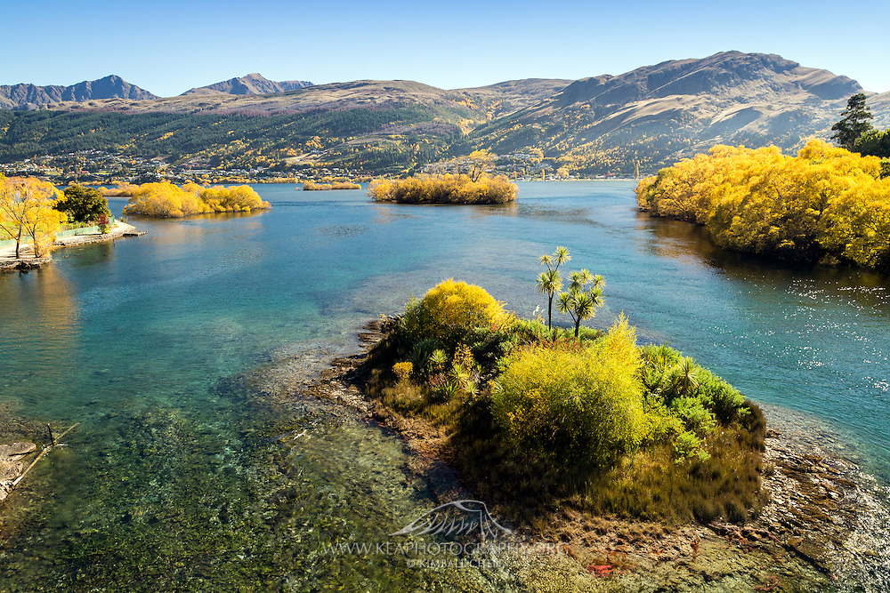 Islands of golden autumn trees stranded thoughout the outlet of Lake Wakatipu, with Queenstown in the far distance.