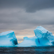 A blue iceberg in the water of Curtis Bay on the Antarctic Peninsula.