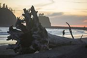 Giant piece of drift wood on 1st Beach in La Push. (Steve Ringman / The Seattle Times)