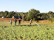 Farmers watering a field in Punta de La Sierra, Pinar del Rio, Cuba.