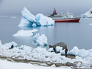 "The red and white ship M/S Explorer anchors near an arched blue iceberg at Neko Harbor, Graham Land, the north portion of the Antarctic Peninsula, Antarctica (in February 2005). Nearby glaciers calve icebergs which melt into the Southern Ocean or dissolve in chunks washed onto the beach. Scientists have measured temperatures on the Antarctic Peninsula as warming faster than anywhere else on earth. An overwhelming consensus of world scientists agree that global warming is indeed happening and humans are contributing to it through emission of heat-trapping ""greenhouse gases,"" primarily carbon dioxide (see www.ucsusa.org). Since the industrial revolution began, humans have increased atmospheric CO2 concentration by 35% (through burning of fossil fuels, deforesting land, and grazing livestock)."