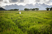 &copy; David Stubbs 2017<br /> Photo by David Stubbs Jackson Hole Wedding Photographer Jackson Hole Wedding Photographer