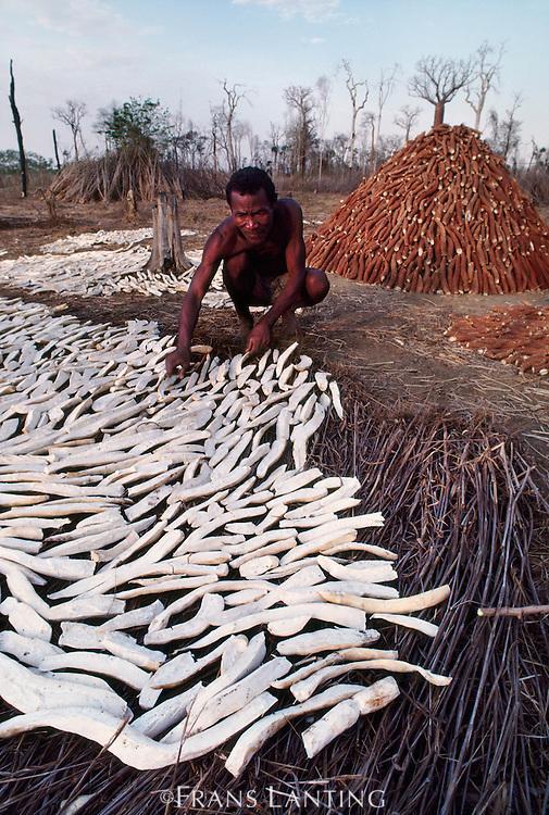 Farmer with manioc crop, Western Madagascar
