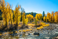 """Truckee River in Autumn 23"" - Autumn photograph of the Truckee River and yellow cottonwood trees in Downtown Truckee, California."