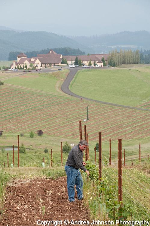 John Albin, Director of viticulture and winemaking, at King Estate Vineyards near Lorane & Eugene, Oregon