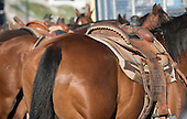 Rodeo: The Timed Events