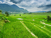 04 AUGUST 2015 - KHOKANA, NEPAL: Rice fields near Khokana, Nepal.        PHOTO BY JACK KURTZ
