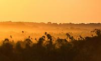 Sunset in the Pantanal region of Brazil.