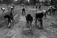 Farmers practice &quot;Zai&quot;: an old Mossi technique fallen into disuse and recovered by the UNGVT. It consists of digging circular holes with a pickaxe at regular distances to slow down not only the water flow but also to direct water towards the seeds to allow them to sprout. In each cavity, the seeds of the cereals which are at the base of the diet - white and red sorghum, millet and maize - are cultivated in association with legumes: beans and peanuts.<br /> Tanlili, Burkina Faso. 09/06/2004<br /> Photo &copy; J.B. Russell