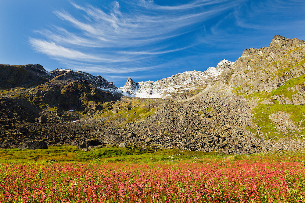 Alpine meadow of fruit of Leatherleaf Saxifrage (Lithophragma parviflorum) at Archangel Valley with Talkeetna Mountains with dusting of snow in background in Southcentral Alaska. Morning. Summer.