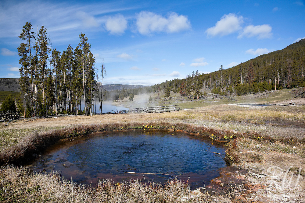Hot Spring Along Terrace Spring Trail Loop Near Madison Junction, Yellowstone National Park, Wyoming
