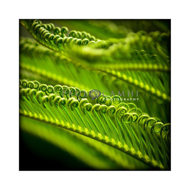 Fine Art photography giclée print