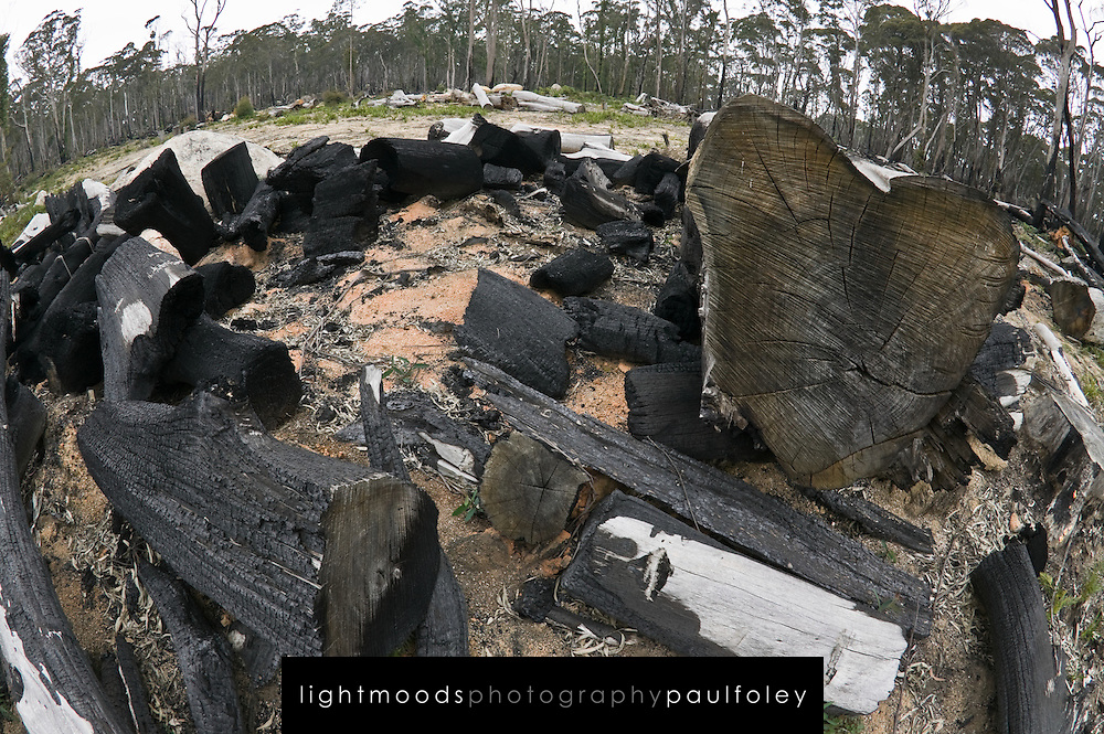 Remnants of burnt logs and trees after logging in State Forests, Snowy Mountains, NSW, Australia