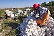 Uzbekistan, Bukhara Province. Cotton harvest.