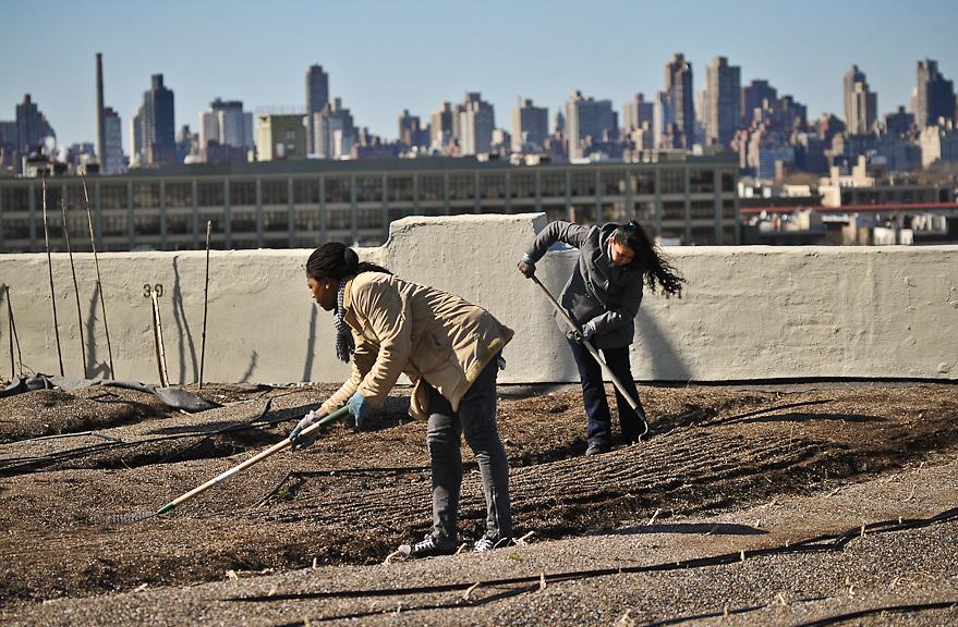 Sowing Spring 2011 Brooklyn Grange