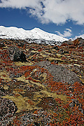 contrasting colours of red, green moss, snow and rock looking up mt ruapehu, central plateau, new zealand