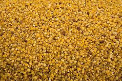 South America, Ecuador, Otavalo, dried corn at food market