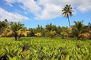 Landscape at Portada de la Libertad, Granma, Cuba.
