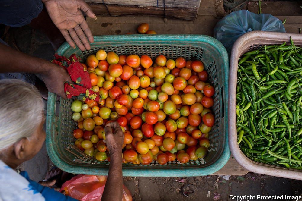 Picking out tomatoes. Pettah market, Colombo