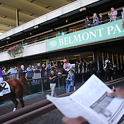 Race horses and jockey's head to the track as punters study their selections during the Jockey Club Gold Cup Day, Belmont Park, New York. USA. 28th September 2013. Photo Tim Clayton