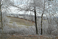 Greenville, NY - Trees are covered in ice after an ice storm on Dec. 14, 2008.
