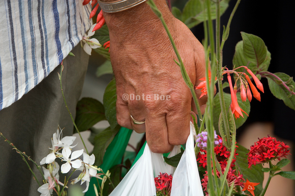 hand close up with flowers bought on a market