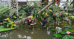 © Licensed to London News Pictures. 02/04/14 About 125 jobs could be cut as the Royal Botanic Gardens in Kew, west London, faces a £5m shortfall in revenue in the coming financial year. FILE PICTURE DATED 06/02/2014. Kew, UK. Horticulturists Ellie Blondi (left) and Alex De Hoyle arranges the displays. Orchids, the first festival on Kew's 2014 events calendar showcases thousands of exotic and rare orchids. The tropical display can be viewed at The Princess of Wales Conservatory, where it's always hotter than 21°C, Kew Gardens, Saturday 8 February to Sunday 9 March 2014. Photo credit : Stephen Simpson/LNP