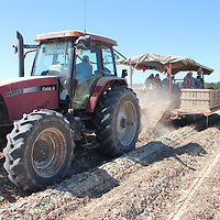 (Floyd Ingram / Buy at photos.chickasawjournal.com)<br /> A tractor pulls a sweet potato digger across a dusty field on the Chicksasaw/Calhoun county line Thursday. Dry weather has area farmer going full tilt to harvest this year's crop.