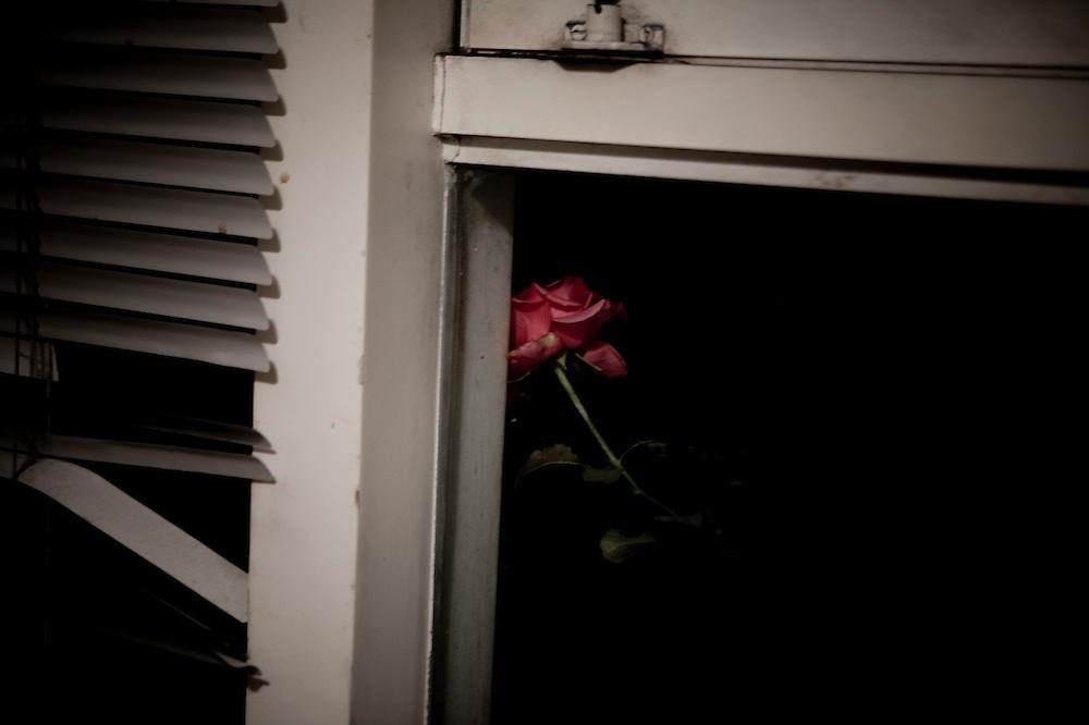 Las rosas que adornan el comedor cuando cena. Se queda mirando a las rosas como hipnotizado.