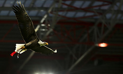 February 3, 2018 - Lisbon, Portugal - Benfica's eagle Vitoria flies over the stadium during the Portuguese League  football match between SL Benfica and Rio Ave FC at Luz  Stadium in Lisbon on February 3, 2018. (Credit Image: © Carlos Costa/NurPhoto via ZUMA Press)