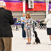 The photography was made during the 2015 Engliish Springer Spaniel Field Trial Association (ESSFTA) National Obedience Trial.  The event took place, Wednesday, September 23th, at Purina Farms, in Gray Summit, MO.