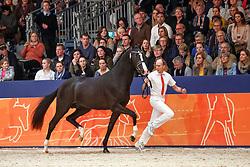 357, Kaiman<br /> KWPN Stallionshow - 's Hertogenbosch 2018<br /> © Hippo Foto - Dirk Caremans<br /> 03/02/2018