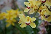 Orchid, Kula Botanical Garden, Upcountry, Maui, Hawaii
