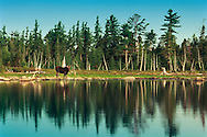 Vereinigte Staaten von Amerika, USA, 2001: Eine Elchkuh (Alces alces americana) steht in der Morgensonne am Ufer des First Roach Pond in der Naehe von Kokajo. | United States of America, USA, 2001: Moose cow, Alces alces americana, standing at the shore of the First Roach Pond, near Kokajo, in the morning light, Maine. |