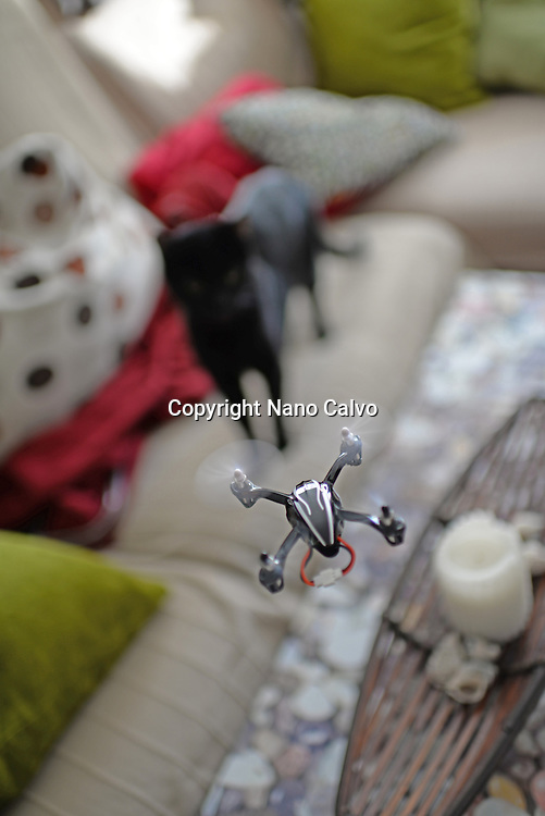 Cat staring at small remote controlled quadrocopter