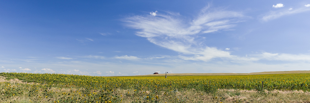 http://Duncan.co/field-of-sunflowers-and-broken-windmill