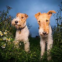 Watson and Marney