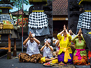 "08 AUGUST 2017 - UBUD, BALI, INDONESIA: Family members pray during a ceremony to honor a family temple in Ubud, Bali. Balinese Hindus have a 210 day calender and every almost every family compound on Bali has a family temple. Once a year (or every 210 days) families celebrate the ""birthday"" of their temple with a ceremony.     PHOTO BY JACK KURTZ"