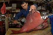 A fisherman cleans a snapper in the fish market in Denpasar, Bali, Indonesia.