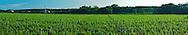 Shinn Estate Vineyard, Mattituck, Oregon Road, Long Island, New York North Fork, panorama
