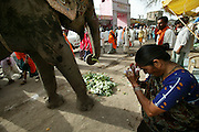 A painted pachyderm pauses for a snack of discarded cauliflower leaves and receives blessings from an admirer during the Kumbh Mela festival, Ujjain, Madhya Pradesh, India. Elephants, like cows and other animals, are shown respect throughout India, and Hindu deities are often represented in their form. (From the book What I Eat: Around the World in 80 Diets.) The Kumbh Mela festival is a sacred Hindu pilgrimage held 4 times every 12 years, cycling between the cities of Allahabad, Nasik, Ujjain and Haridwar.  Participants of the Mela gather to cleanse themselves spiritually by bathing in the waters of India's sacred rivers.  Kumbh Mela is one of the largest religious festivals on earth, attracting millions from all over India and the world.  Past Melas have attracted up to 70 million visitors.