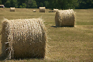 Hay and Pasture